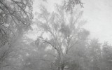 После снегопада в подмосковном лесу