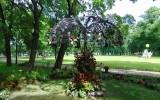 Международный фестиваль «Императорские сады России»