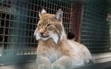 «Закулисная» жизнь обитателей Московского зоопарка