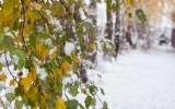 Золотая осень и первый снег