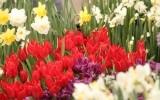 Выставка весенних растений «Репетиция весны»