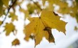 Золотая осень в Москве